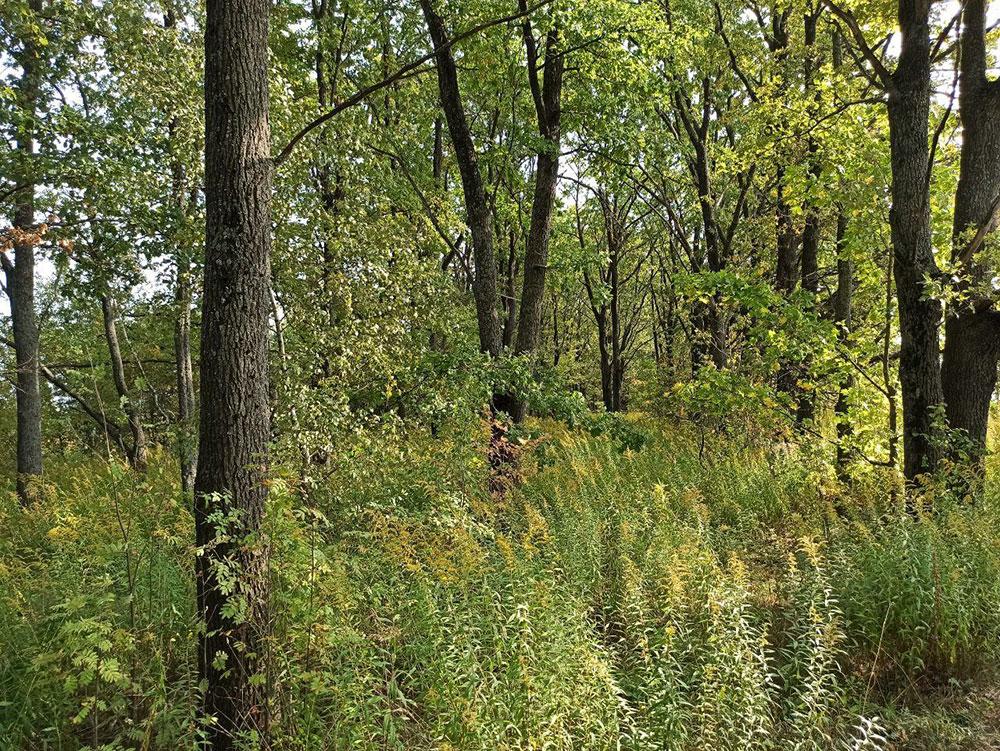 Грибы в лесу или сорняки?