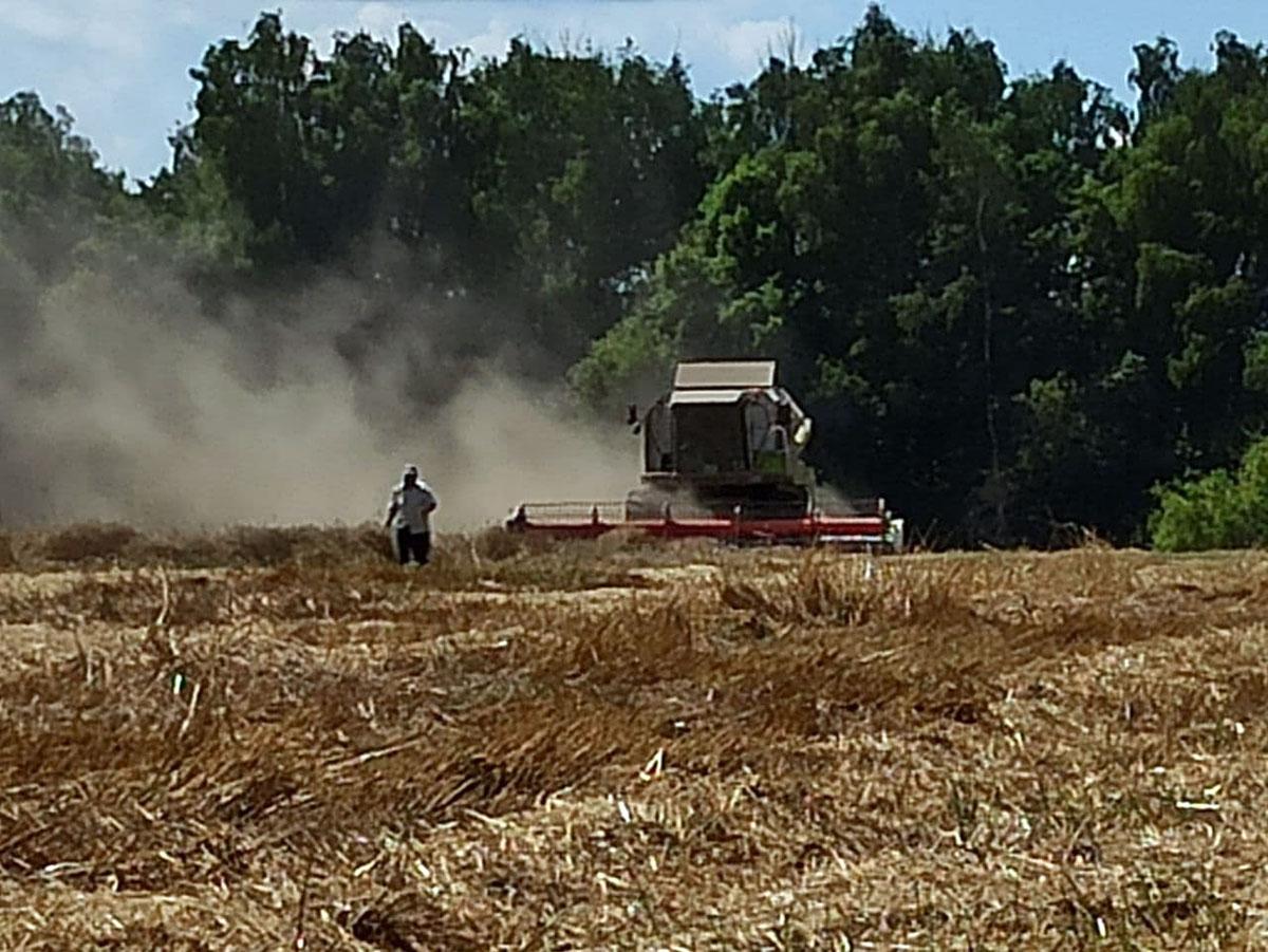 Липиды и липопротеиды зерна пшеницы