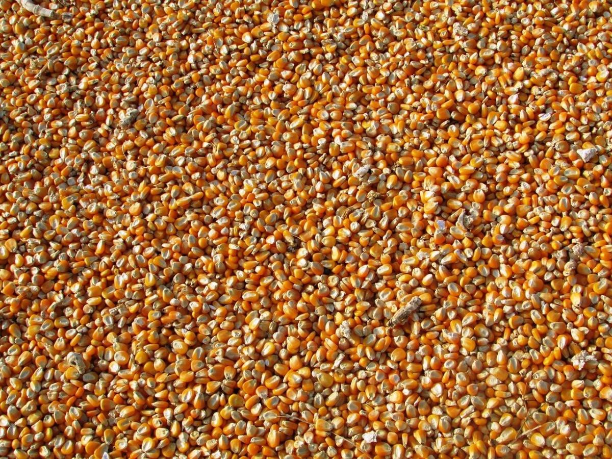 corn-264520_1280