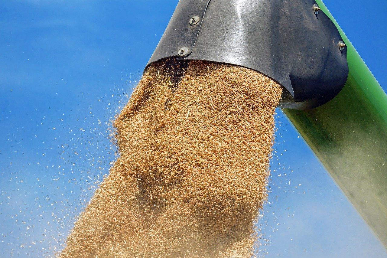 wheat-1508654_1280